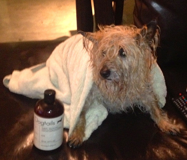 Amos Loves Dogtails Dog Shampoo