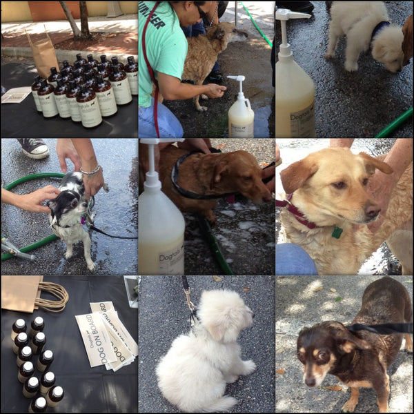 Dogtails Barks and Bubbles at the Humane Society of Miami