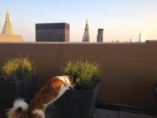 Dog in plant, Dogtails