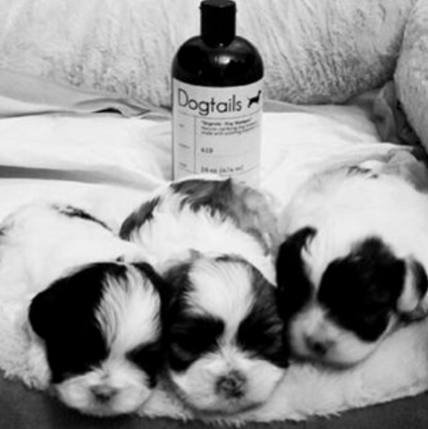 Dogtails Dog Shampoo