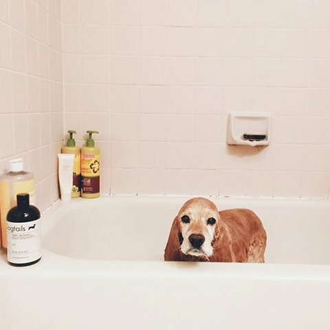 Dogs That Love Dogtails Dog Shampoo