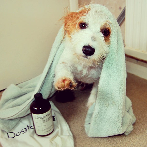Ginnyjrt Loves Dogtails Dog Shampoo
