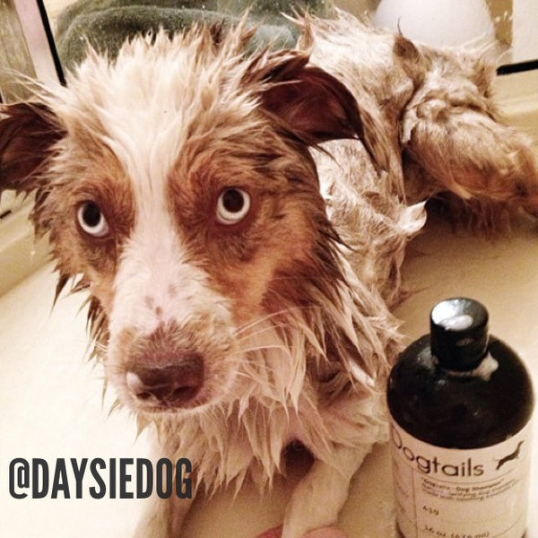Daysie Dog Loves Dogtails Dog Shampoo