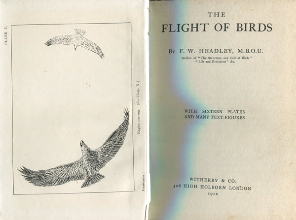 Headley - The Flight of Birds - 1912