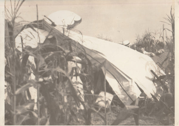 Cornfield Crash Photo