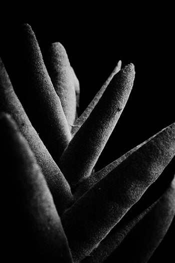 Black & White Art Print - Aloe