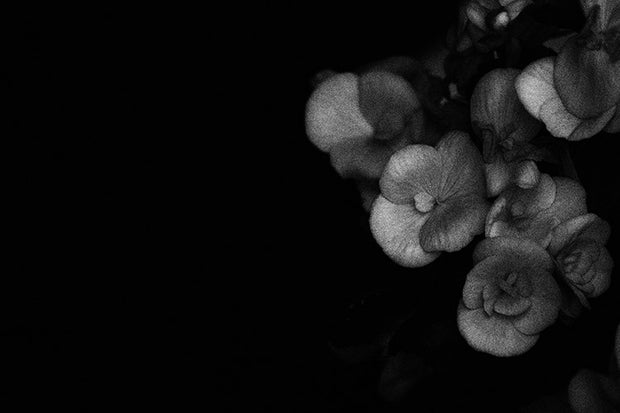 Black & White Art Print - Blossom Soft
