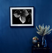 Black & White Art Print - Leaves