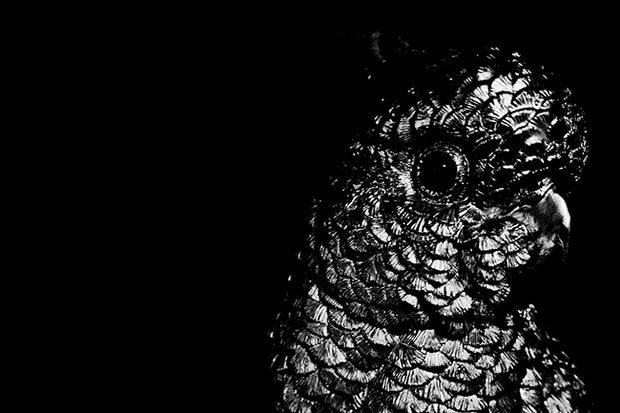 Black & White Art Print - Parrot