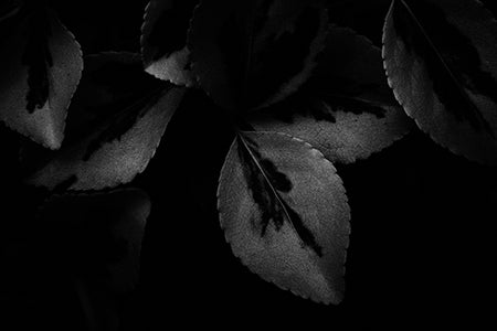 Black & White Art Print - Shadow Leaves