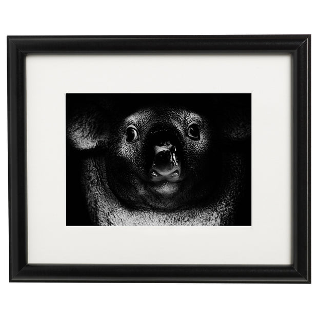 Black & White Art Print - Koala