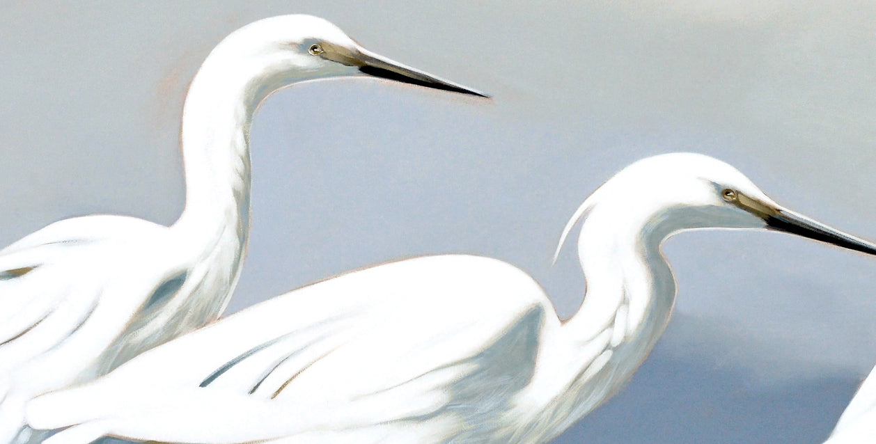 Egrets on the Bitou