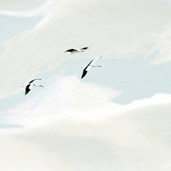 White Storks in flight