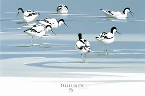 Avocet in Blue