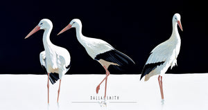 White Stork on Black
