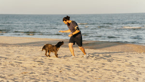 What's the Best Time of Day to Train Your Dog