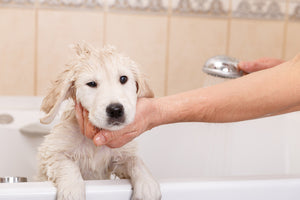 Bath Time Can Also Be Puppy Training Time