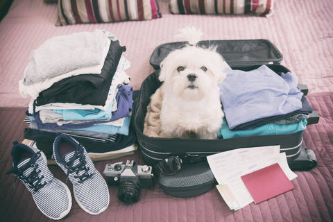 A dog packed in a suitcase