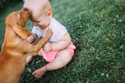Puppy playing with a baby