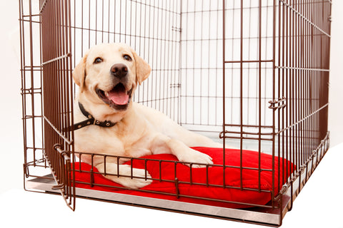 Happy dog in their crate