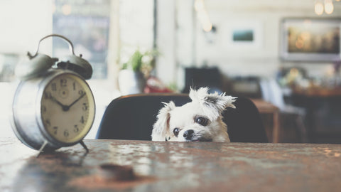 Dog watching the clock