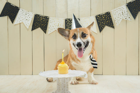 Puppy celebrating his birthday