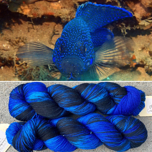 Southern Blue Devilfish Yarn Box