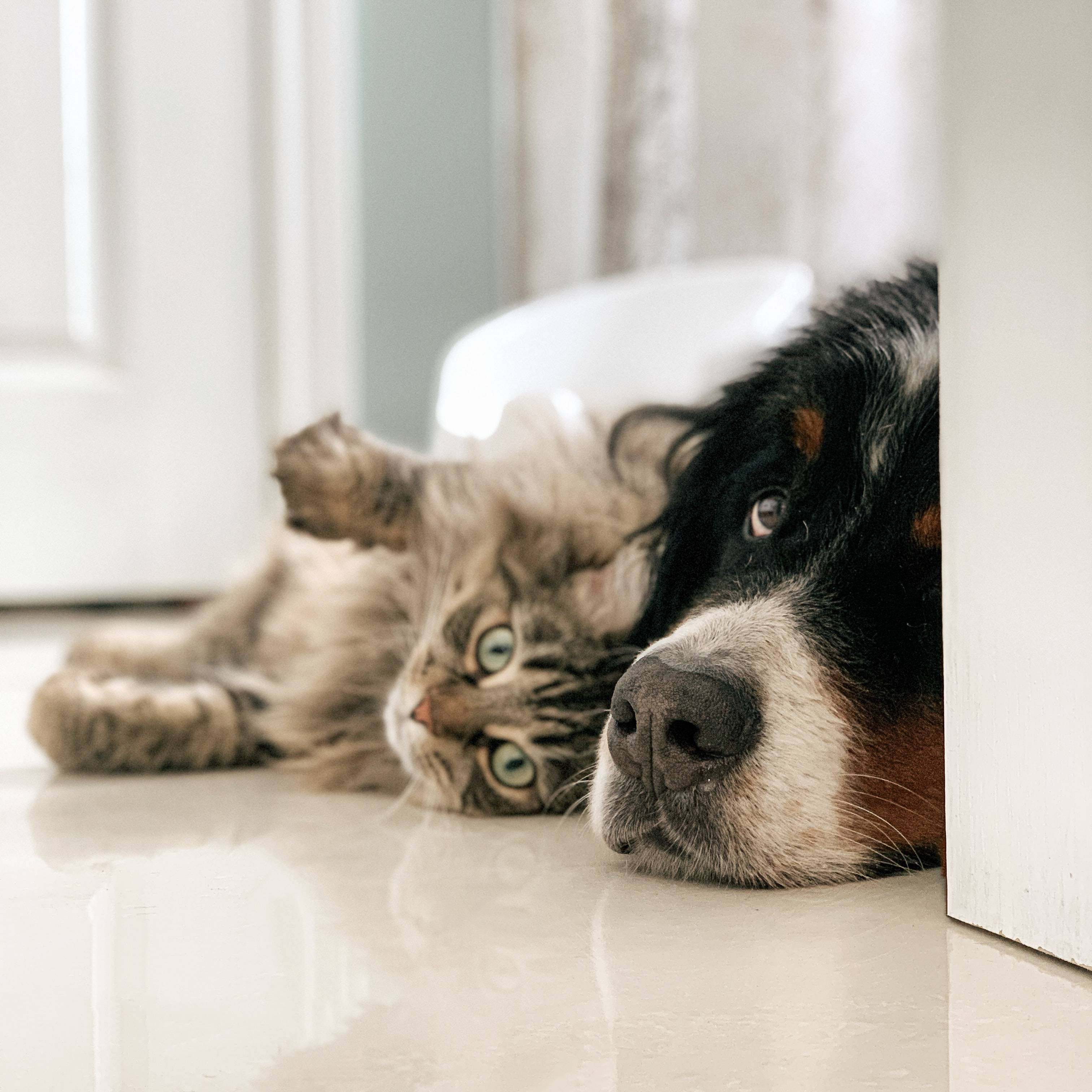 Cat and Dog - unusual Friends