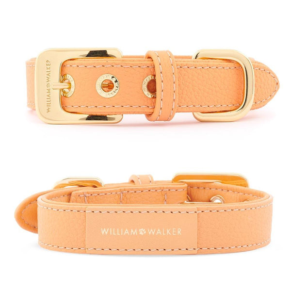 William Walker Orange // Halsband & Leine Set + Kostenloser Kotbeutelspender