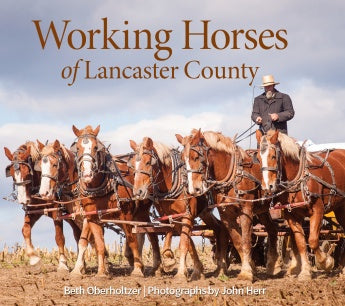 Working Horses of Lancaster County