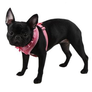 harnesses for small dogs like blue french bulldogs