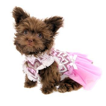 Daphne Party Dog Dress for Malta Chow Chow French Bulldog