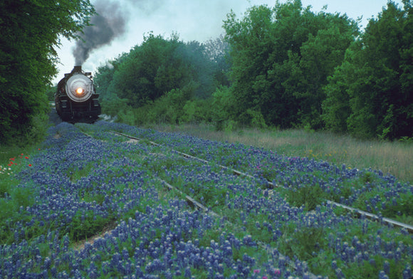 Steam Your Way Through Bluebonnets