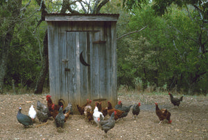 Texas Outhouse & Chickens