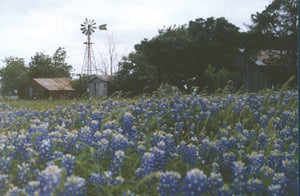 Windmill and Bluebonnets