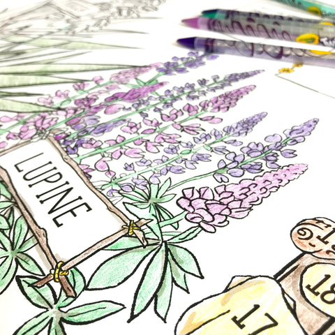 lupines on Island of the Blue Dolphins Poster