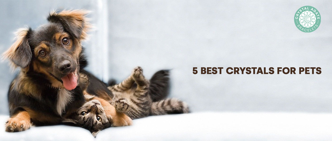 5 Best Crystals For Pets