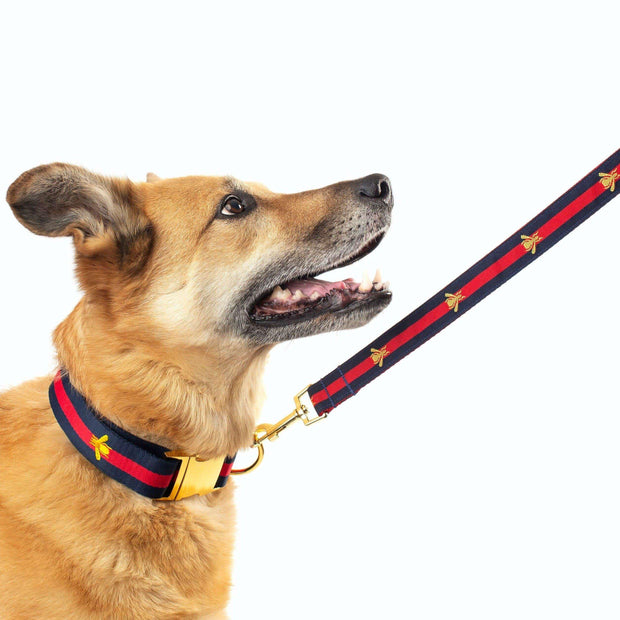 "Dog Collars - Designer Golden Bee Dog Leash - ""The Poochie Golden Bee Leash"""