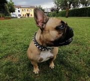 Dog Collars - Rivet And Stud Leather Dog Collar
