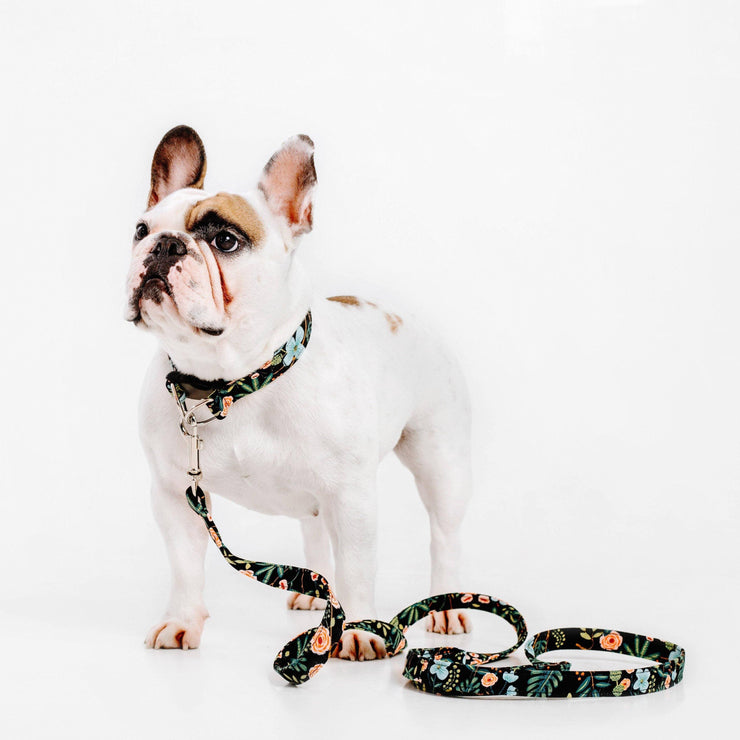 Dog Collars - Walk It Out! - Custom MOBF Matching Leash