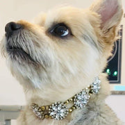 Pet Jewelry - The Helios Golden Rhinestone Pet Collar Necklace
