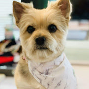 Pet Lifestyle - Carrara White Marble Pet Bandana