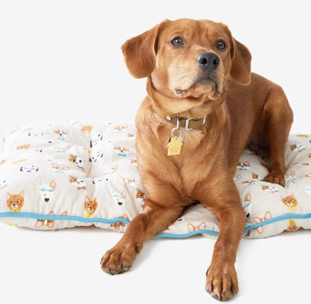 "Pet Lifestyle - EnVougue ""Smarty Pants"" Medium Pet Bed"