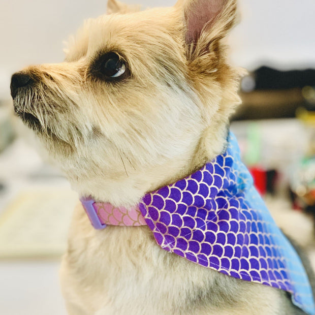 Pet Lifestyle - The Sirena Mermaid Dog Bandana