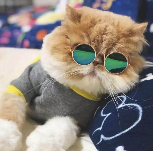 Pet Lifestyle - Vintage Pet Round Sunglasses