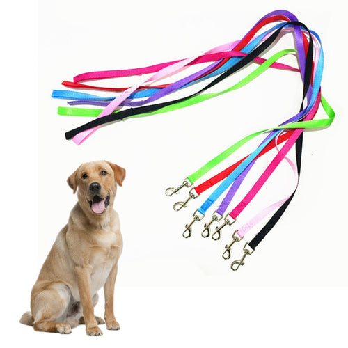 colorful nylon dog leashes showing labrador retriever
