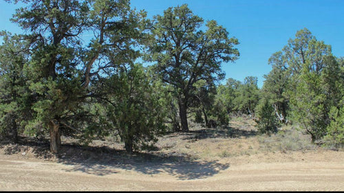PRIME 40 Acre Lot North Arizona with Road Access, Pine Trees, Level, 6600' Elevation