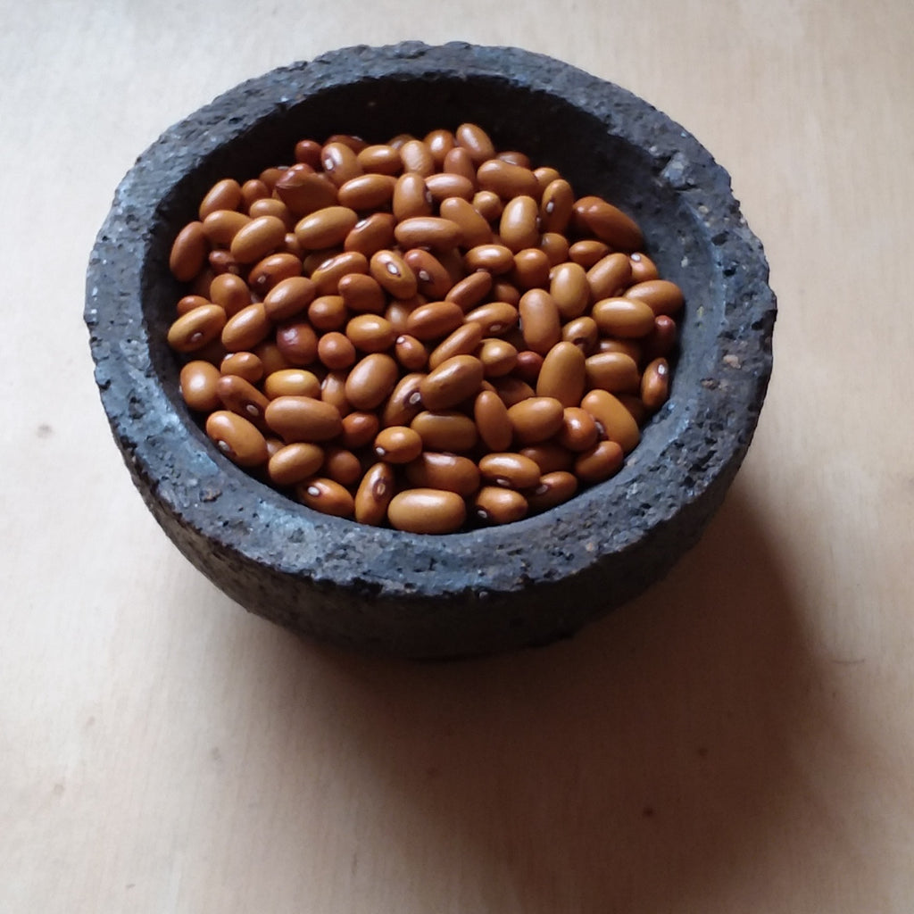 Variety Focus:  Oland Swedish Dry Bean
