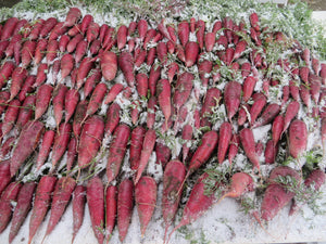 Fresh Carrots All Winter