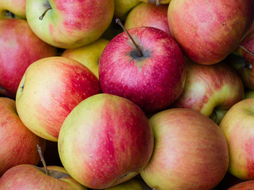 Organic pest management:  Codling moth in apples